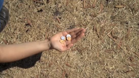 Seed Money1
