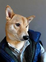mensweardog