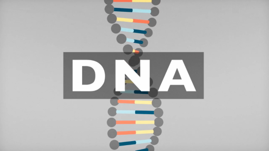 BBC Knowledge - DNA Explainer